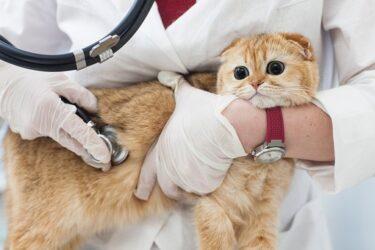 【病気】指定難病6。『パーキンソン病』とは何か。分かりやすく説明いたします。【介護】